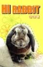Hi Rabbit